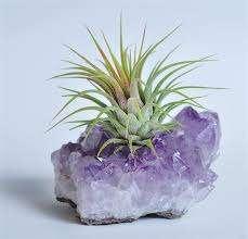 אבן האושר וצמח אוויר- מתנות לטו בשבט, מזכרות לאירועים
