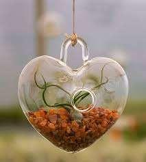 צמח אוויר לב- מתנות לטו בשבט, מתנות סוף שנה